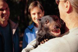 Tasmania Devil 1