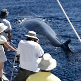 Whale Watching 1